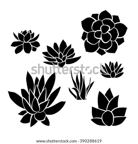 Graphic Set of succulents isolated on white background for design of cards, invitations - stock photo