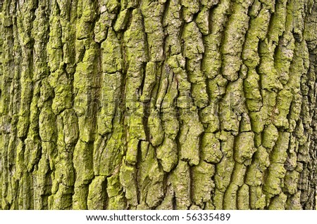 graphic texture of tree bark - stock photo