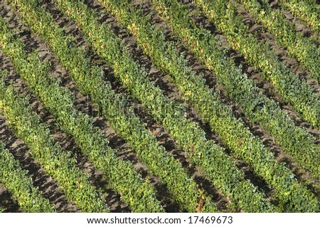 Graphic view of the world famous vineyards of Porto wine. - stock photo
