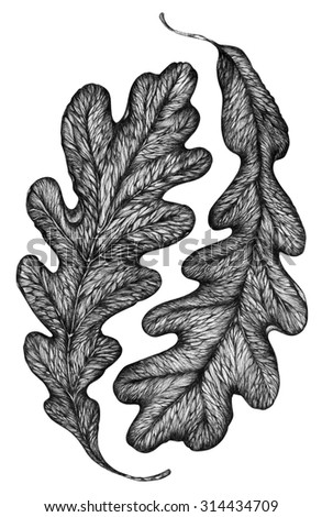 graphically painted leaf of oak (ink, pen)