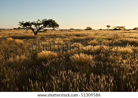 Gras in the sunset