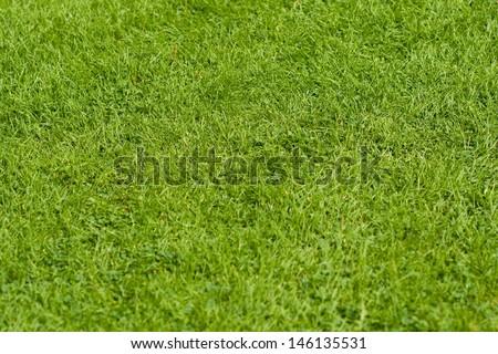 Grass - stock photo
