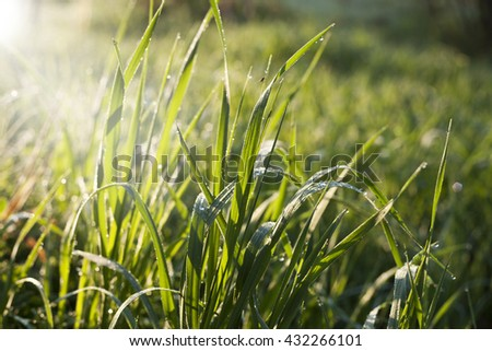 Grass. - stock photo