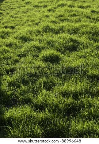 Grass. - stock photo