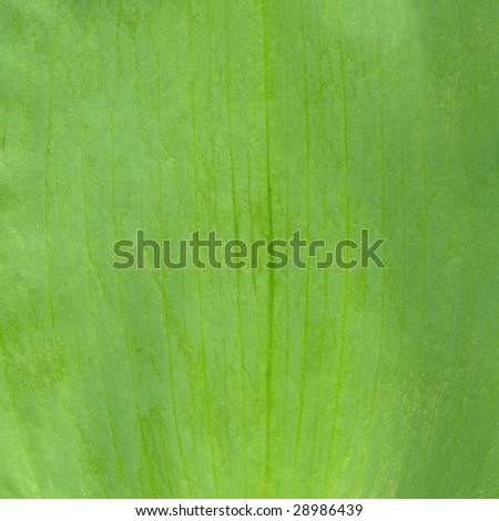 Grass a background. - stock photo