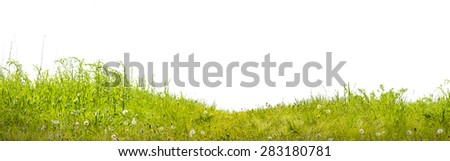 grass a green lawn on a white background - stock photo