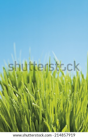 Grass against blue background