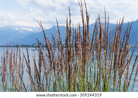 Grass against mountains and lake Geneva from the Embankment in Montreux. Switzerland - stock photo