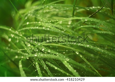 grass all covered with dew droplets of different sizes. Fresh spring green grass.  - stock photo