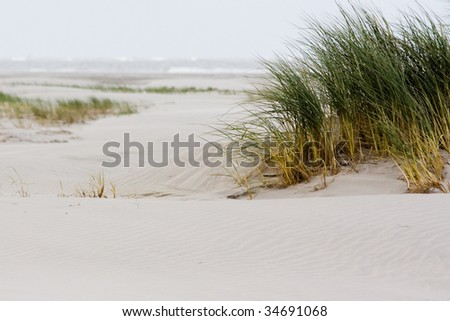 Grass and a beach - stock photo