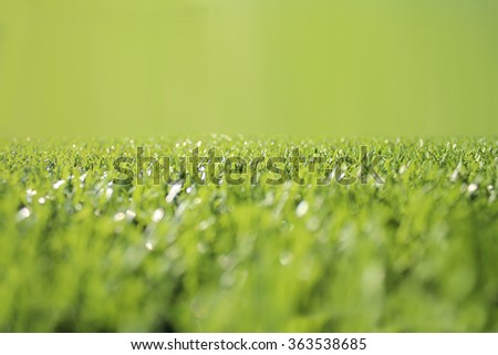 Grass and blur background - stock photo