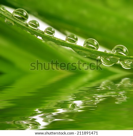 grass and dew drops - stock photo