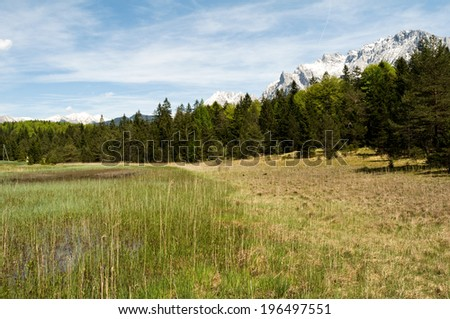 Grass and dirt near a forest of trees. - stock photo