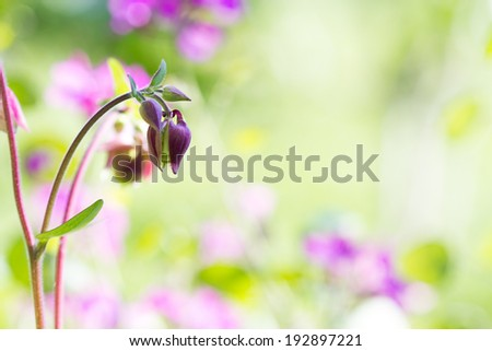 Grass and flower background