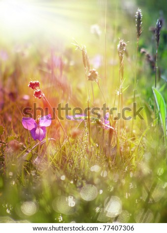 grass and flower field under the morning sunlight - stock photo