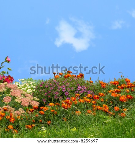 grass and flowers - stock photo