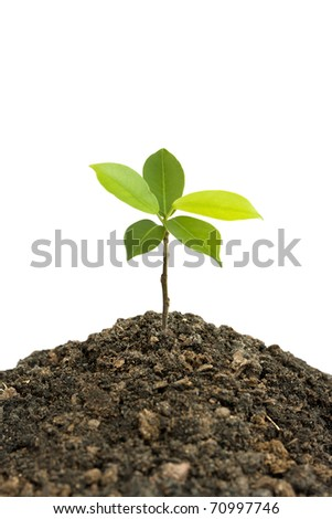 grass and green plants growing on soil manure. - stock photo
