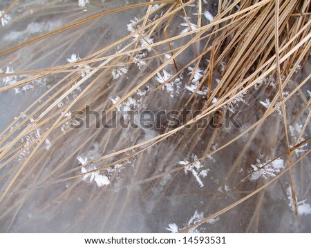 Grass and ice, winter background, wallpaper - stock photo