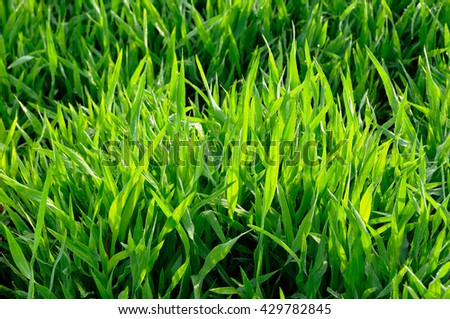 Grass and morning sunlight/ background - stock photo