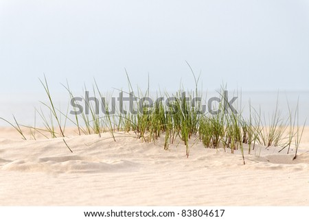 Grass and sand. - stock photo