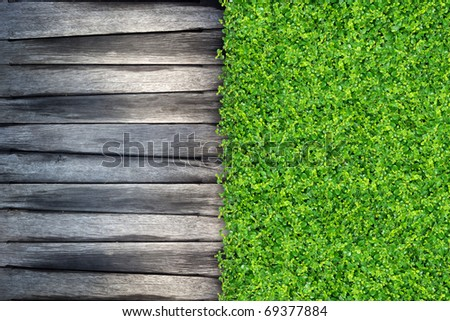 grass and Small green plants depend on old wood - stock photo