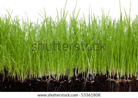 Grass and soil on a white background - stock photo