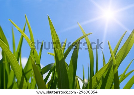 Grass and sun - stock photo