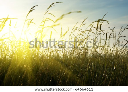 grass and sunset - stock photo