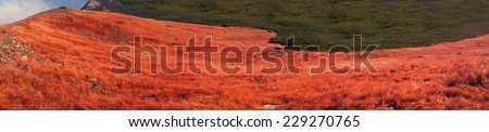 Grass and vegetation in autumn pasture - gentle transitions of tones and colors, warm ocher and golden shades, removed as a panorama for decorative background - stock photo