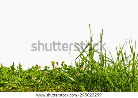 grass and white clover isolated on white background