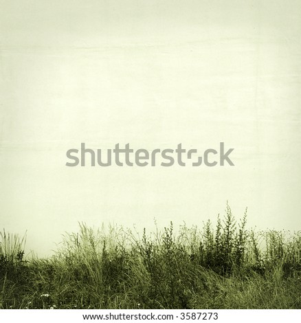 grass and white wall - stock photo