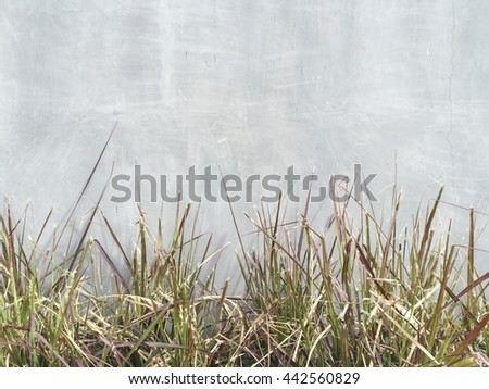 Grass at front of concrete wall texture background - stock photo