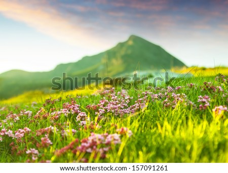 Grass at highland meadow in Pyrenees - stock photo