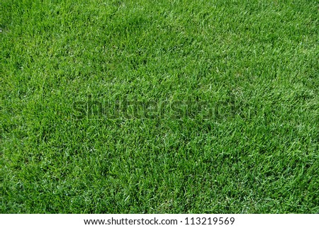 Grass background - stock photo
