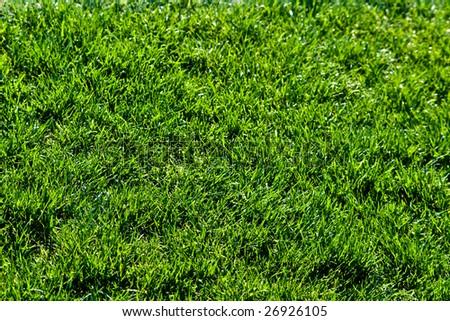 Grass background - stock photo