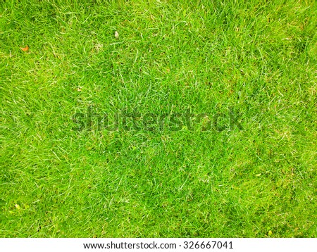 Grass background. - stock photo