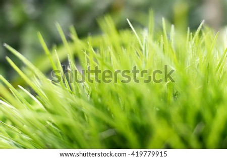 Grass background. Fresh, green grass with selective focus and copy space.  - stock photo