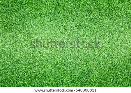 grass background green lawn pattern textured background.