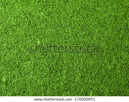 Grass background. Top view - stock photo