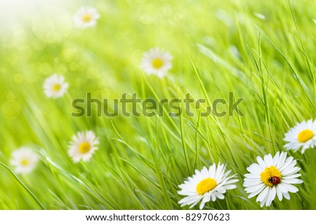 grass background with daisies flowers and one ladybird, this is a sunny day - image is blurry on the left side for copy space - stock photo