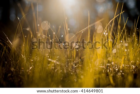 Grass Background with Dew Drops and Sun light.Yellow, Brown and Green.Fresh green grass with dew drops closeup. Nature Background - stock photo