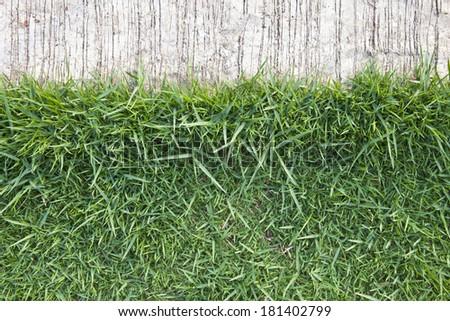 grass background with edge  next to concrete floor, grass edge - stock photo