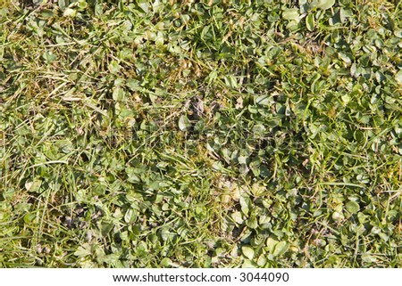 grass background with weeds