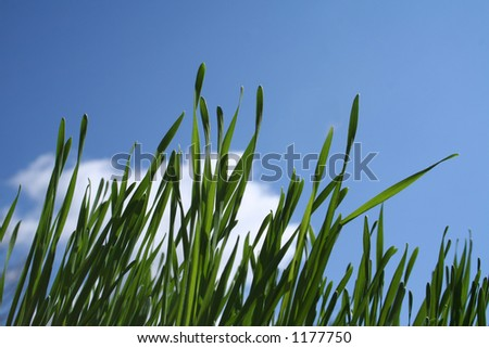 grass balces against the blue sky