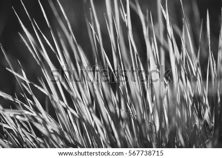 Grass, black and white