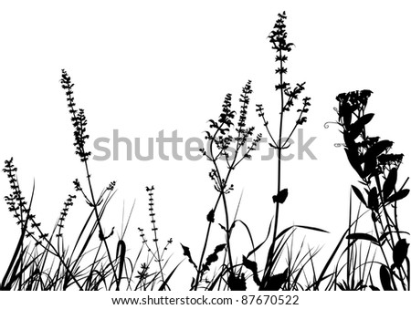 Line Drawing Grass : Grass black detailed silhouettes stock illustration
