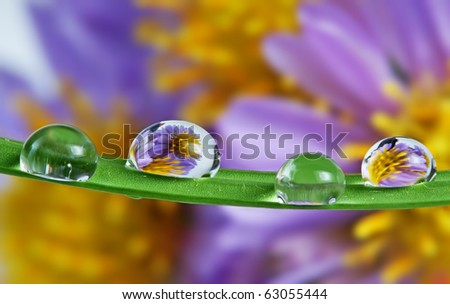 grass blade with drops mirroring flowers - stock photo