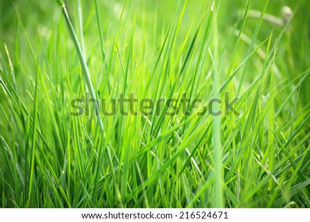 Grass blades There are green grass blades and sunshine.  - stock photo