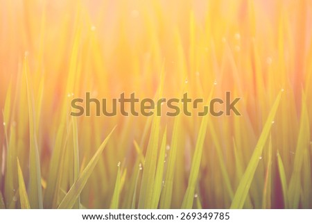 Grass-blades with drops of morning dew - instagram style - stock photo