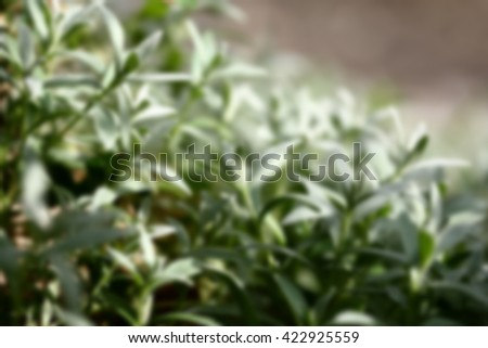 Grass, blurred 100% - stock photo